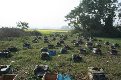 local apiary