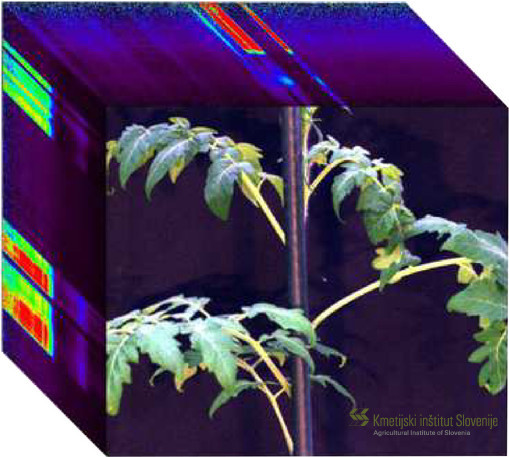 hyperspectral_datacube_tomato