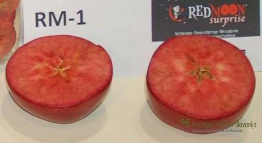 Plod sorte Red moon (Roter mond) v prerezu.